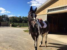 Cute horse, kinda looks like Travis