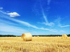 Eikla, Saaremaa - Saarenmaa, Estonia - Viro, Aug 2nd 2014. Taken by iPad. #eikla #saaremaa #saarenmaa #pelto #field #landscape #maisema #ipad #estonia #viro