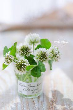 not ordinary because of ordinary flowers 花を飾る Little Flowers, Green Flowers, My Flower, White Flowers, Flower Power, Beautiful Flowers, Pot Plante, Australian Garden, Kraut