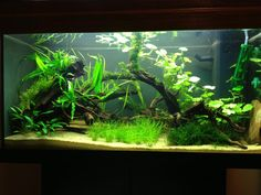 pictures of south american aquariums - Google Search