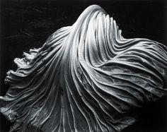 Click to view full size image + Slideshow Edward Weston 014