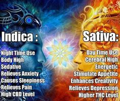 Indica and Sativa are two major sub-species of Marijuana. While Sativa is perfect for day use, Indica acts as the perfect sedative after a long day. Be a marijuana connoisseur. Know your weed! Ganja, Planta Cannabis, Cannabis Plant, Cannabis Edibles, Cannabis Growing, Cannabis Oil, Herbal Vaporizer, Marijuana Facts, Weed