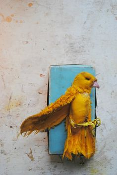 Mister Finch: Yellow and Turquoise........