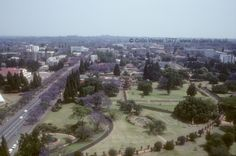 Salisbury Gardens looking North from Livingstone House , 1977 Baobab Tree, Victoria Falls, All Nature, Acropolis, African Countries, Salisbury, Places Of Interest, Top Of The World, East Africa