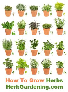 Learn How To Grow Your Own Herb Garden Indoors or Out!