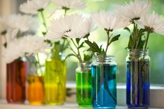 Vases filled with colored water -- I've done this before and it is very striking but inexpensive #centerpieces