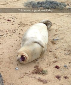 Animals that will add some much needed levity to your day