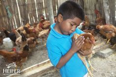 In this photo of the week, Nixon Josue (6) demonstrates his expert hen-handling skills! He lives with his family in San Jose Village, Ecuador.