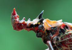 第17回 祝・辰年! 龍の顔をもつ昆虫 | ナショナル ジオグラフィック(NATIONAL GEOGRAPHIC) 日本版公式サイト