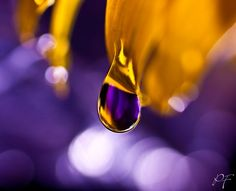 Hope by on DeviantArt Purple Yellow, Shades Of Purple, Purple Gold, 50 Shades, Orange, Macro Photography, Creative Photography, Cherry Blossom Painting, Drip Drop