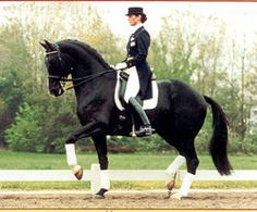 A dressage horse executing the Piaffe in competition: the horse trots in place without moving forward and continues to display the high knee action of a brisk, working trot. Description from prairienerd.wordpress.com. I searched for this on bing.com/images