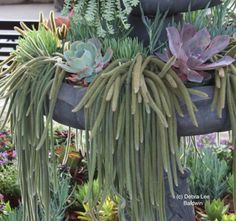 Yes, more succulents.