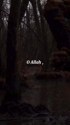 Best Quran Quotes, Quran Quotes Inspirational, Islamic Love Quotes, Muslim Quotes, Quran Verses, Quran Sayings, Best Motivational Videos, Muslim Pictures, Increase Knowledge