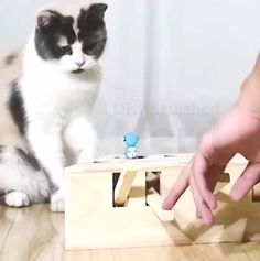 Interactive wooden cat toy - Reveal your cat& predator instincts! Healthy and high quality material – Our interactive ca - Animals And Pets, Baby Animals, Funny Animals, Cute Animals, Cute Cats, Funny Cats, Interactive Cat Toys, Cartoon Toys, Wooden Cat
