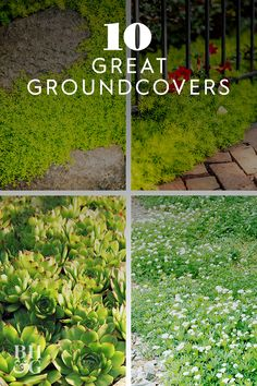 Whether they're low and sleek or tall and blousy, groundcover plants do just what they say they will. Dependable and hardworking, these plants can thrive in drought, shade, and other difficult spots. Backyard Fences, Front Yard Landscaping, Backyard Ideas, Garden Ideas, Garden Design Plans, Low Maintenance Landscaping, Ground Cover Plants, Garden Living, Back Gardens