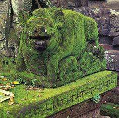 """wordissound: """" Mossy Pig by sarcoptiform on Flickr. """""""