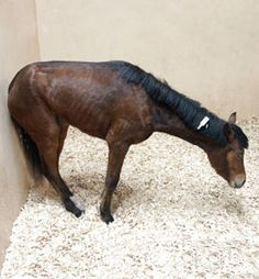 Blood test may help diagnose equine grass sickness