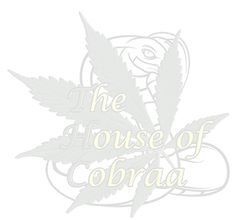 Test Post from The House of Cobraa