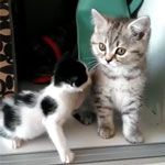 Little kitten just wants some milk