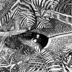 Available for sale: Kirstenbosch Spring, ink on paper drawing by contemporary South African artist Kitty Dörje, size 64 x 64 cm unframed. White Ink, Black And White, South African Artists, Paper Drawing, Ink Drawings, Fine Art Paper, Art Pieces, Kitty, Spring
