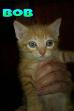 Nací a mediados de abril de 2013. Soy rubio de ojos azules y ya sé comer solo y usar el arenero. Me gustan Mucho los mimos.