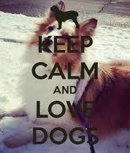 """Résultat de recherche d'images pour """"image keep calm and animals"""""""