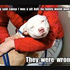 They say cause I'm a pitbull no family would adopt me; They were WRONG ! =)