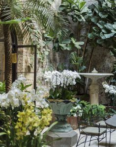 Rose Uniacke London conservatory garden orchids by Matthew Williams