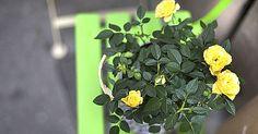 Nem kell permetezni! Pofonegyszerű módszer, hogy megvédd a növényeidet a kártevőktől - www.kiskegyed.hu Terrarium, Herbs, Gardening, Muffin, Plant, Balcony, Terrariums, Lawn And Garden, Herb