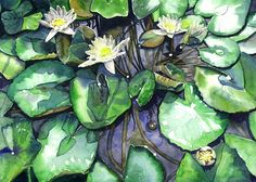 Water lilies ORIGINAL WATERCOLOR PAINTING flowers
