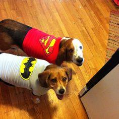 It's super Basset and bat beagle.