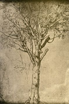 Study the masters. Study their work some more. Look at a tree. (Drawing a Tree) - Leonardo da Vinci Michelangelo, Renaissance Kunst, Pierre Auguste Renoir, Art Plastique, Tree Art, Painting & Drawing, Water Drawing, Find Art, Amazing Art