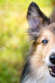 Half profile   Rescue dog outdoor portrait   Pet Photography   Main Line Philadelphia   Copyright 2015 Aliza Schlabach Photography   ByAliza.com