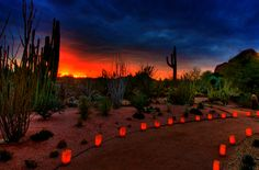 Next time you are enjoying one of our premier rentals in Arizona Make a day of it.the Desert Botanical Gardens are so close to the Phoenix Zoo. Desert Botanical Garden Phoenix, Botanical Gardens, Desert Mountains, Glass Garden, Adventure Is Out There, Things To Do, Beautiful Places, National Parks, Scenery
