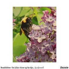 Bumblebee  On Lilac close up by djoneill Wood Wall Décor.  Bumble bees love lilacs! this hard working little critter posed for me. there is such beauty here. Dress up your wall with this spring scene that is full of natural beauty and color. Nature Photography