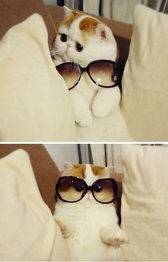 OMG! I want this cat!!!