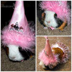 It's a Princess Guinea Pig soooooooooooooo cute