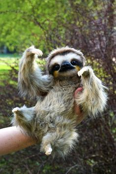 Animals Discover Realistic cute and cuddly sloth Cute Little Animals Cute Funny Animals Cute Dogs Cute Babies Cute Wild Animals Happy Animals Animals For Sale Ugly Baby Animals Baby Exotic Animals Baby Animals Super Cute, Cute Wild Animals, Baby Animals Pictures, Cute Little Animals, Cute Animal Pictures, Cute Funny Animals, Animals Beautiful, Happy Animals, Cutest Animals