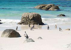 Cape Town--gotta love the penguins :)