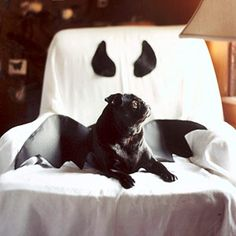 Bhg Halloween indoor decoration. Couch cover.  Dog bat costume. DIY