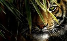It's the eye of tiger! (Insert awesome music)