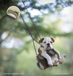 """""""BUSTER"""" Bulldog Print by Ron Schmidt. Swing, Puppy, Playground, Photography, Dog Art"""