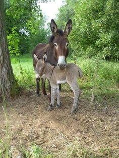 mama and baby. #donkeys Visit our page here:http://what-do-animals-eat.com/donkeys/