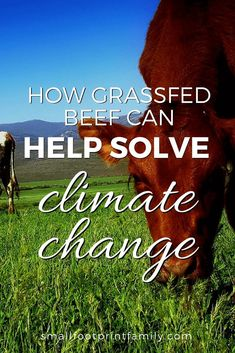 Scientists and ranchers alike see managed grazing as the best solution to desertification, air and water pollution, and even climate change. Here's why. #greenliving #ecofriendly #sustainability #gogreen #naturalliving #climatechange #grassfedbeef #holisticgrazing #sustainableagriculture