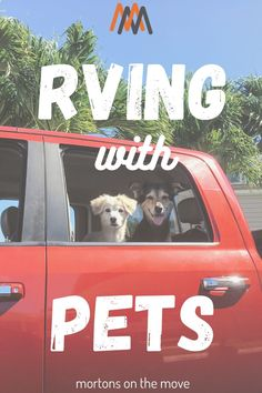 5 Rules for RVing with Pets Many RVers travel with pets - both dogs AND cats! RVing can be a great way to travel without leaving your pets at home or at a boarding facility, which can often stress out your pet (and you). Before you take your pet out on the road, however, there are several things you need to consider to prepare yourself and your pet for a successful RV roadtrip. #rvlife #fulltimerv #rvingwithpets #travelwithpets Travel Hack, Pet Travel, Ways To Travel, Rv Life, Your Pet, Dog Cat, Road Trip, Stress, Adventure