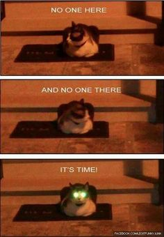 Laser eyed cat