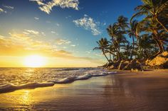 Landscape of paradise tropical island beach, sunrise shot - Palm trees on the tropical beach, Dominican Republic