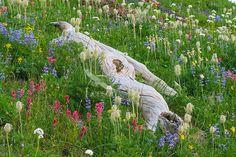 fallen log in wild flowers - Google Search