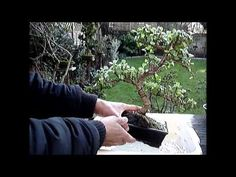 Back To Basics, Bonsai, Videos, Plants, Plant, Planets, String Garden