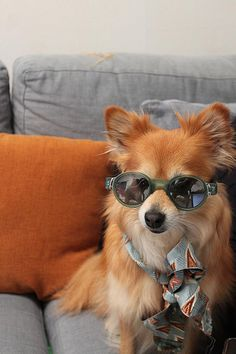 fear and loathing. doggie style.
